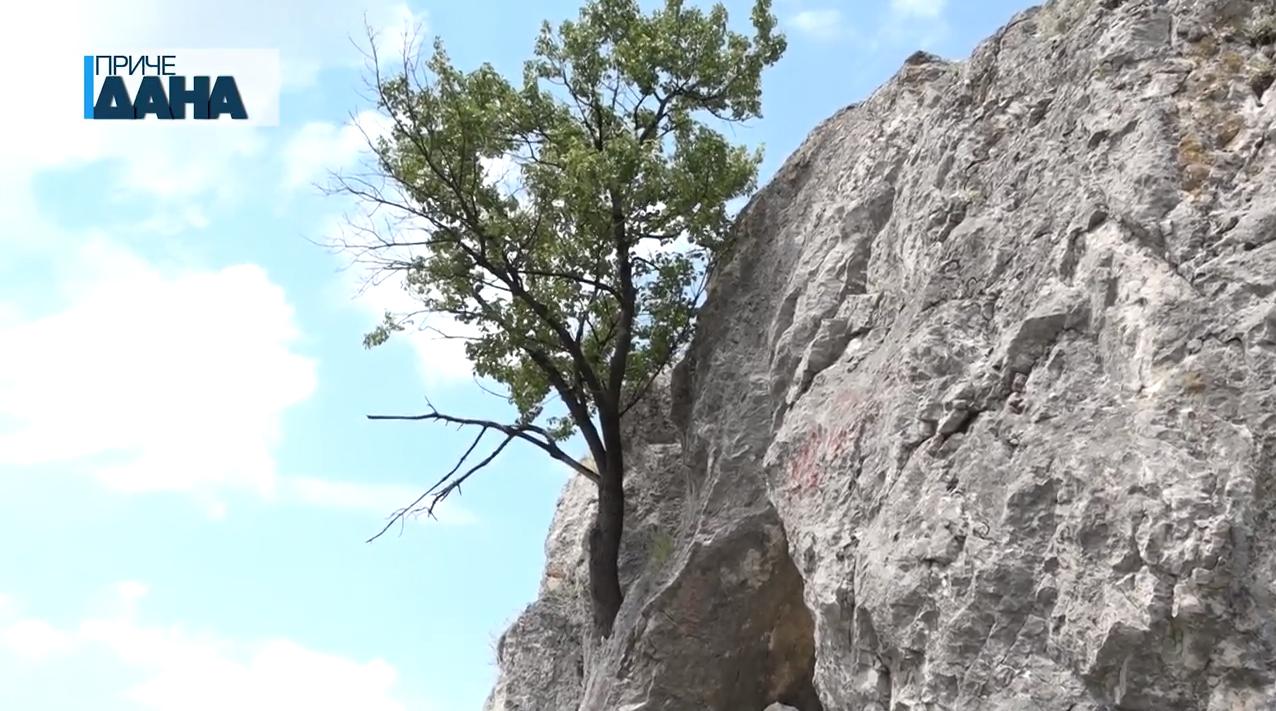 Divlja višnja raste iz kamena, Petruška oblast