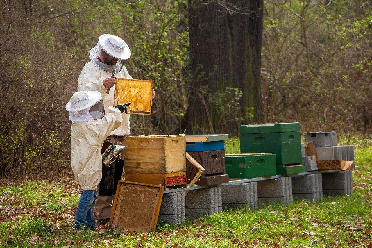 Počelo je podnošenje zahteva za subvencije po košnici pčela