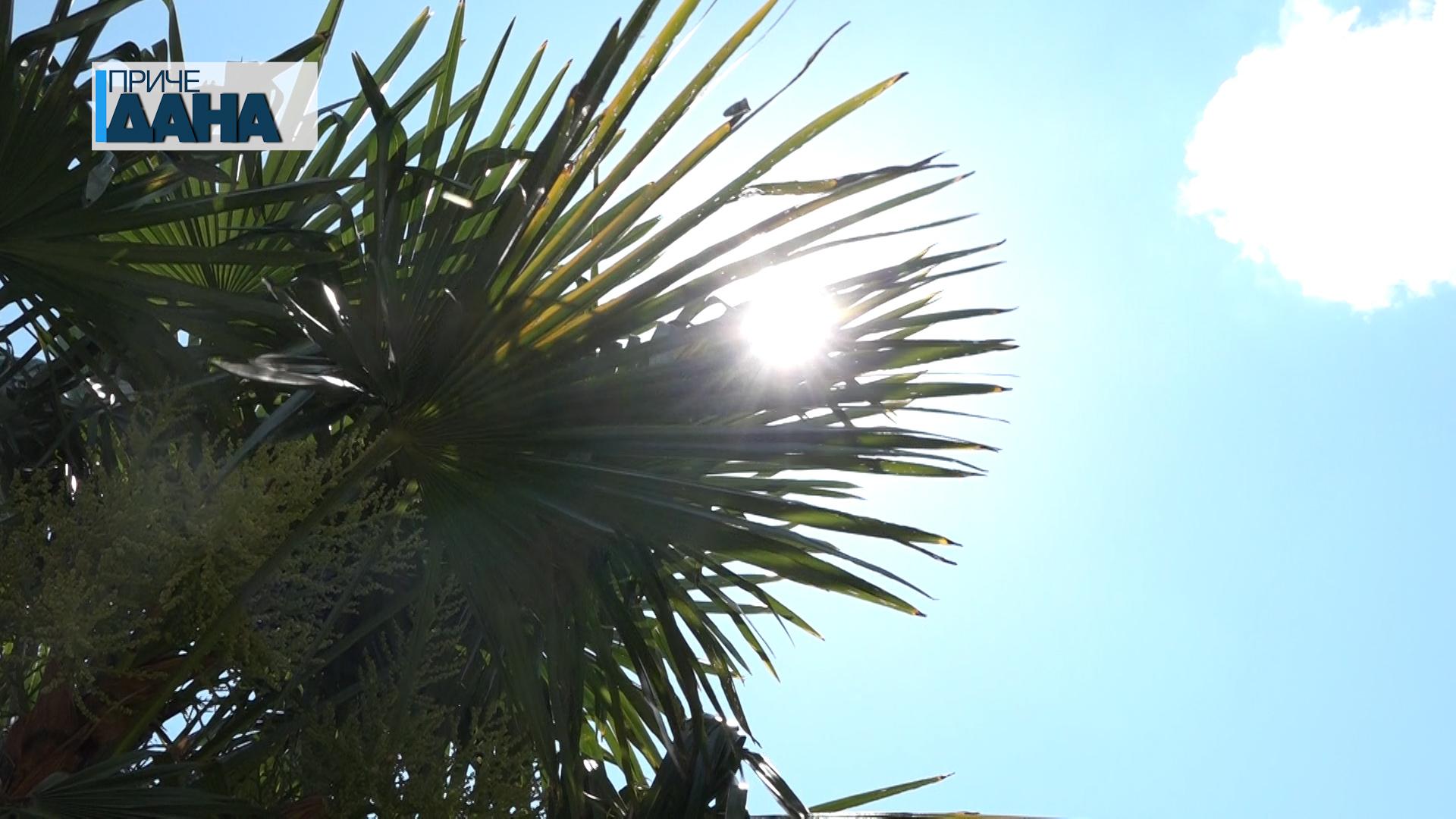 Rekordna majska temperatura u Paraćinu