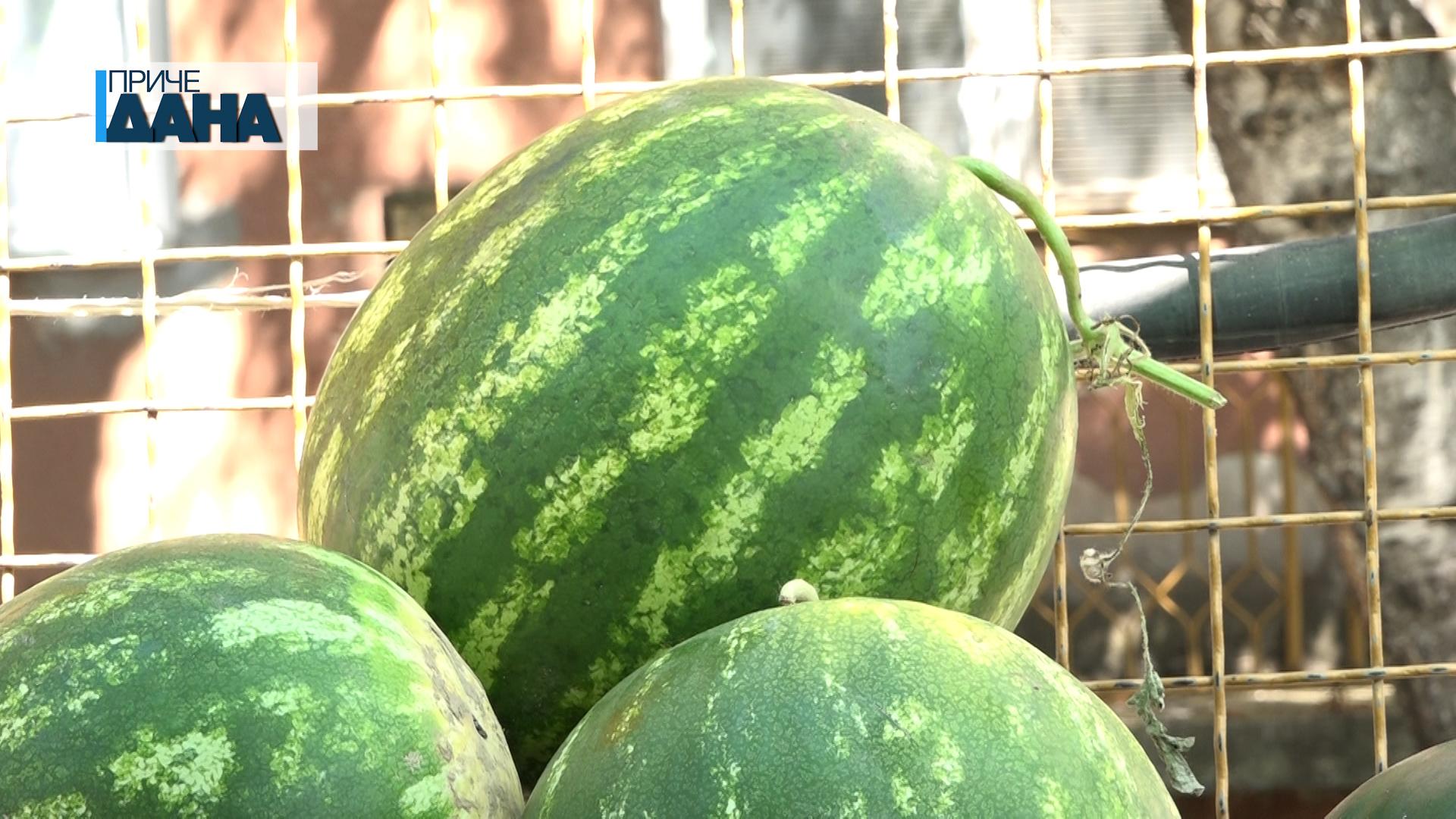 Kako da znamo koja je lubenica zrela i slatka?