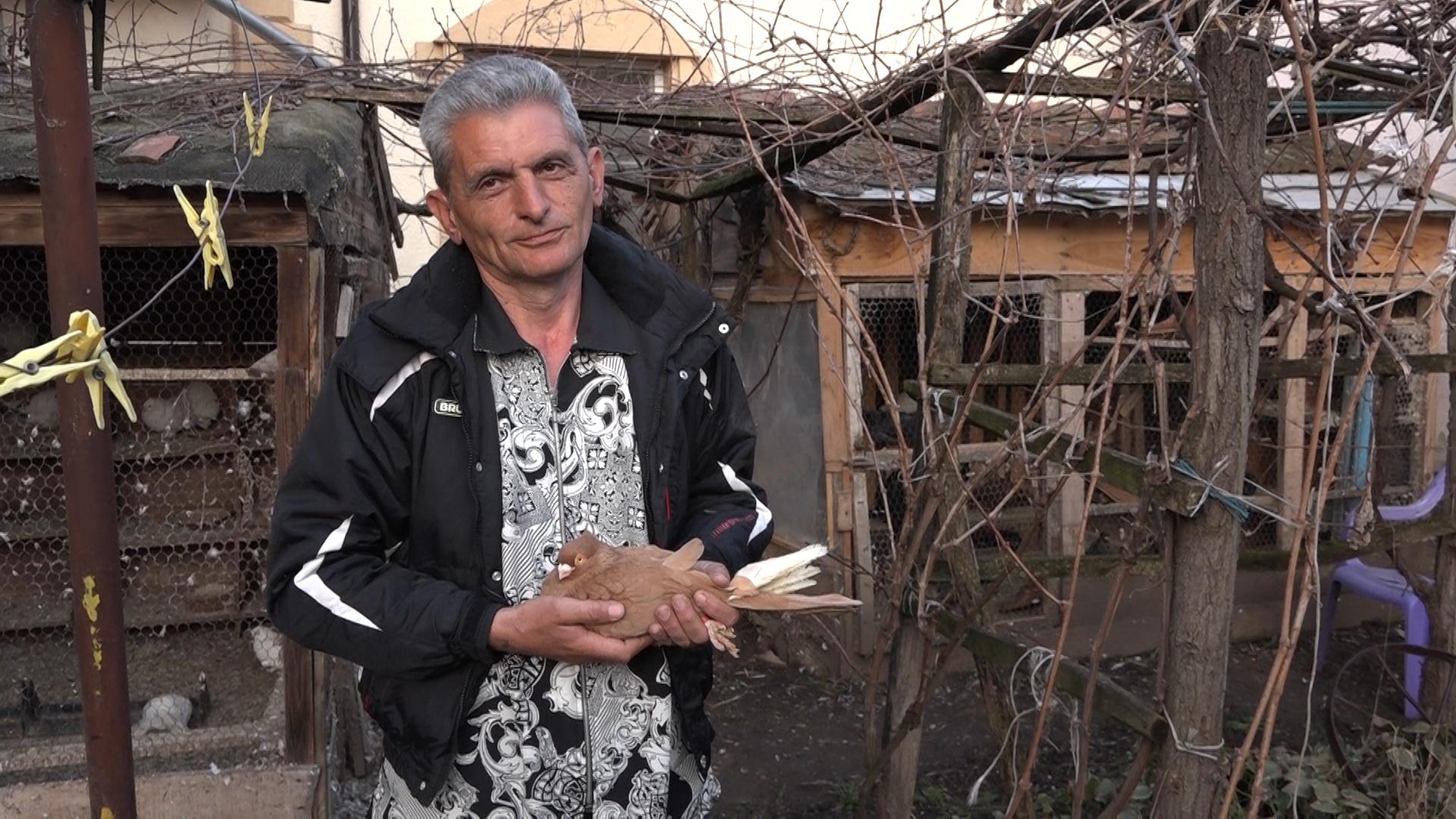 Zoran Miljković iz Sikirice čuva više od 150 golubova